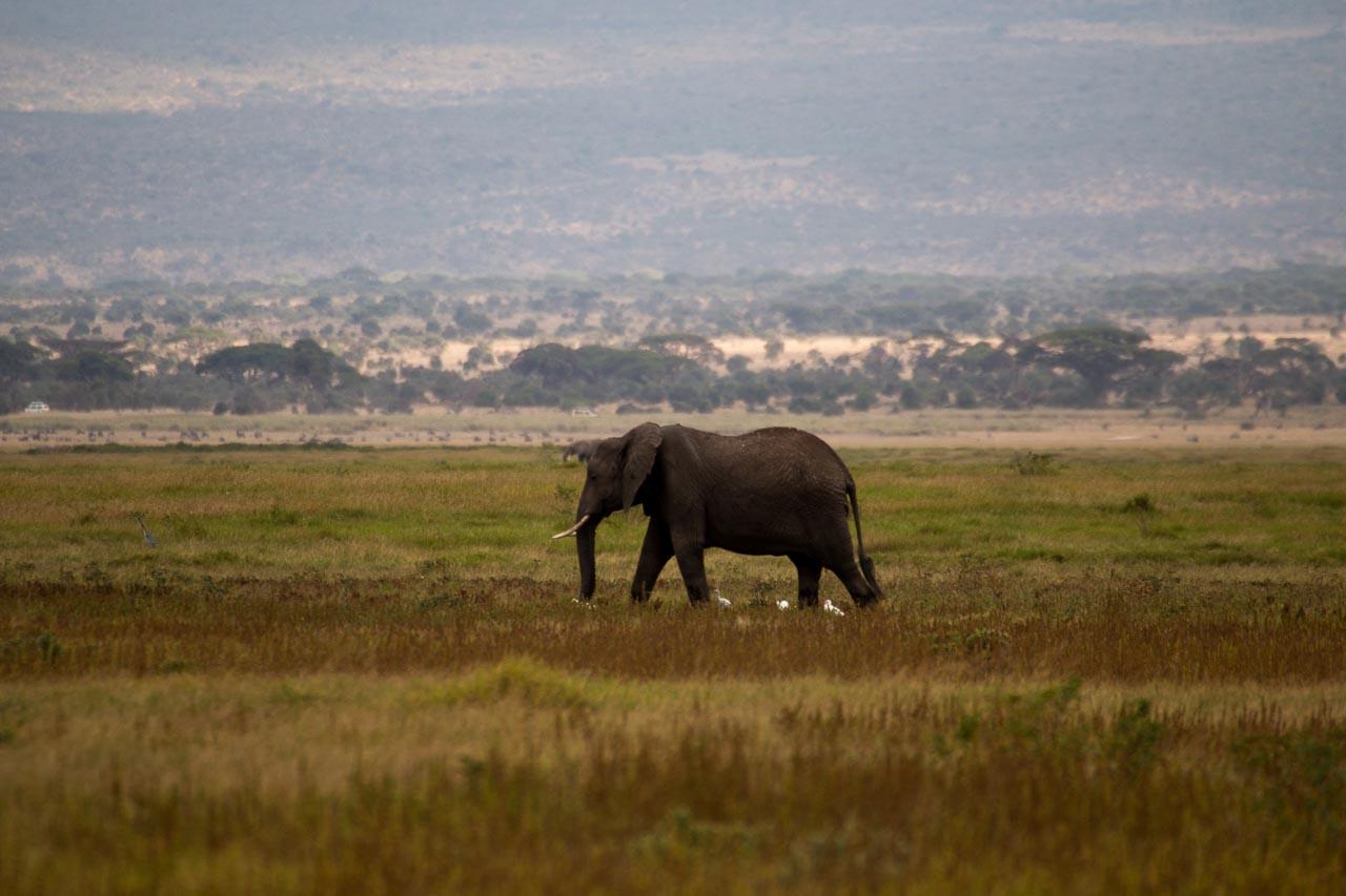 Elefant (10)