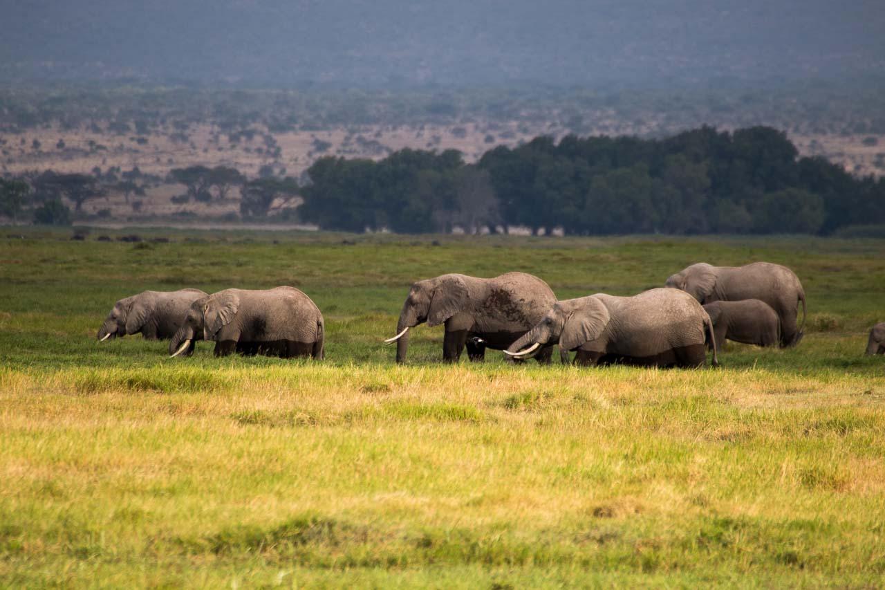 Elefant (16)