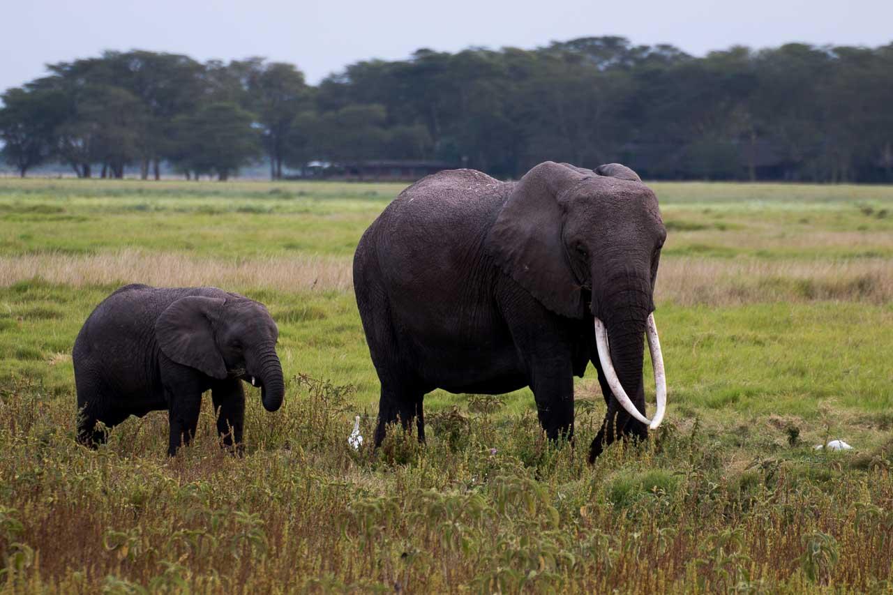 Elefant (18)