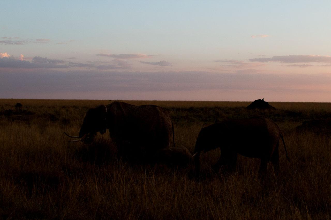 Elefant (27)