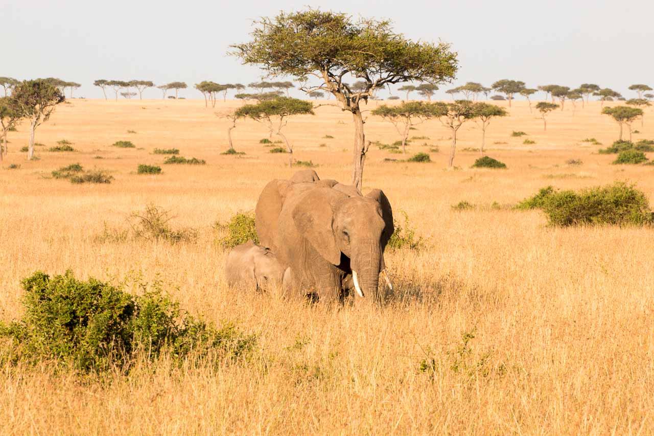 Elefant (31)