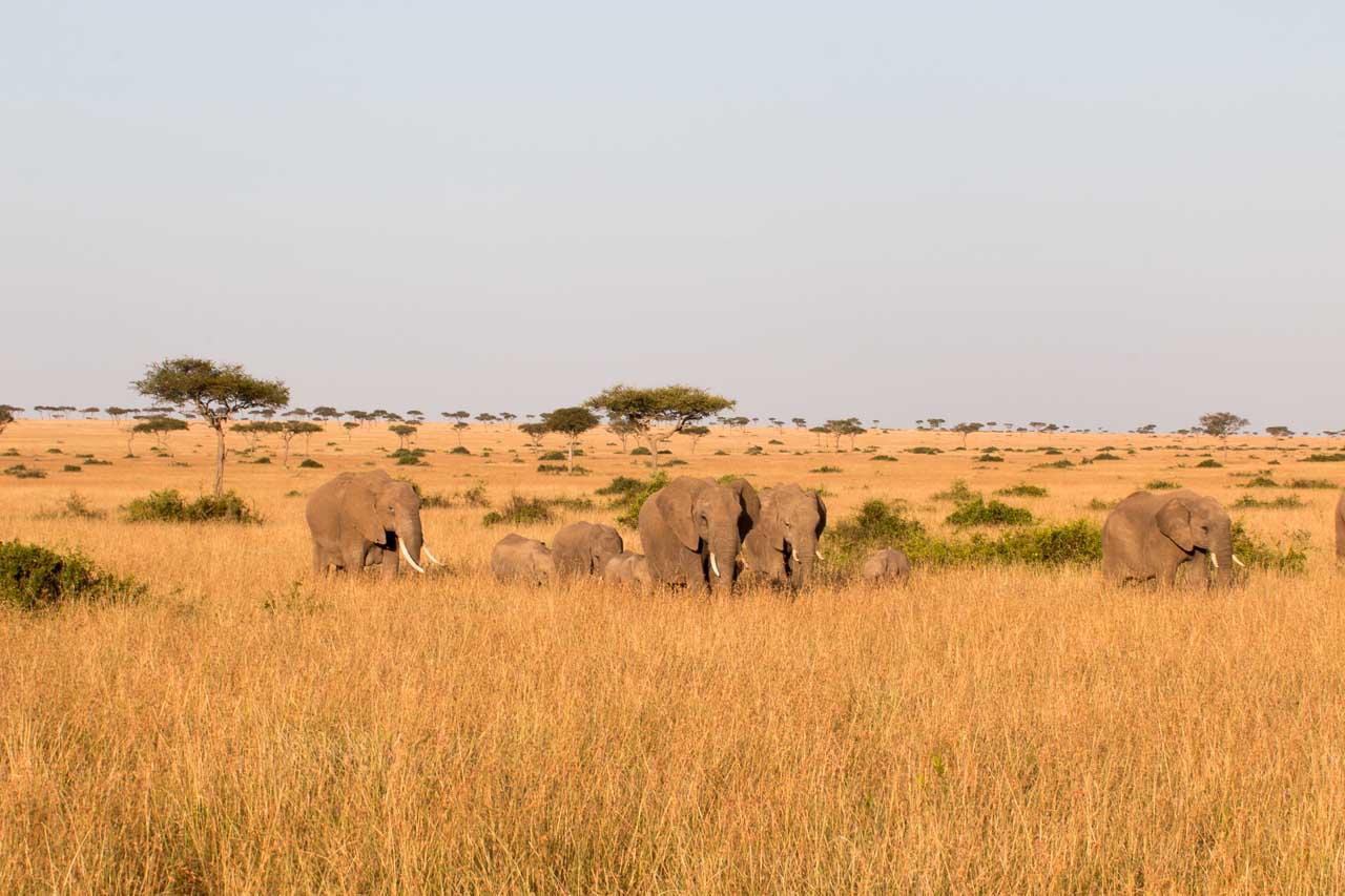 Elefant (32)