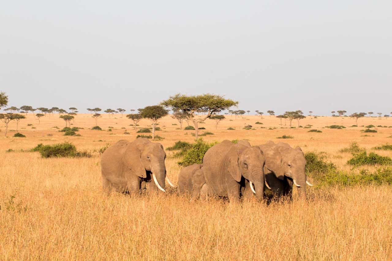 Elefant (33)