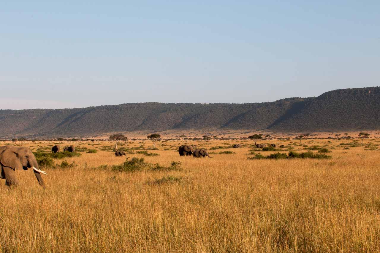 Elefant (36)