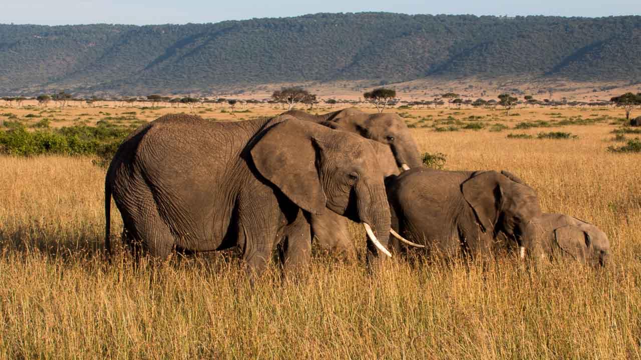 Elefant (37)