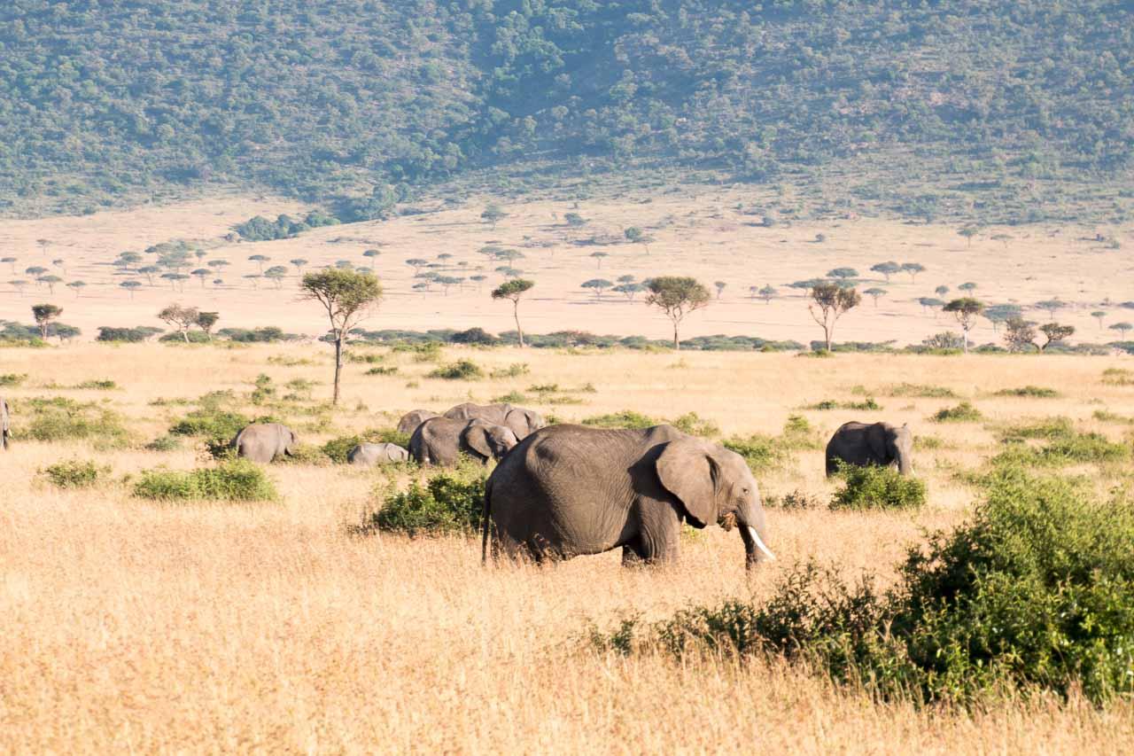 Elefant (41)