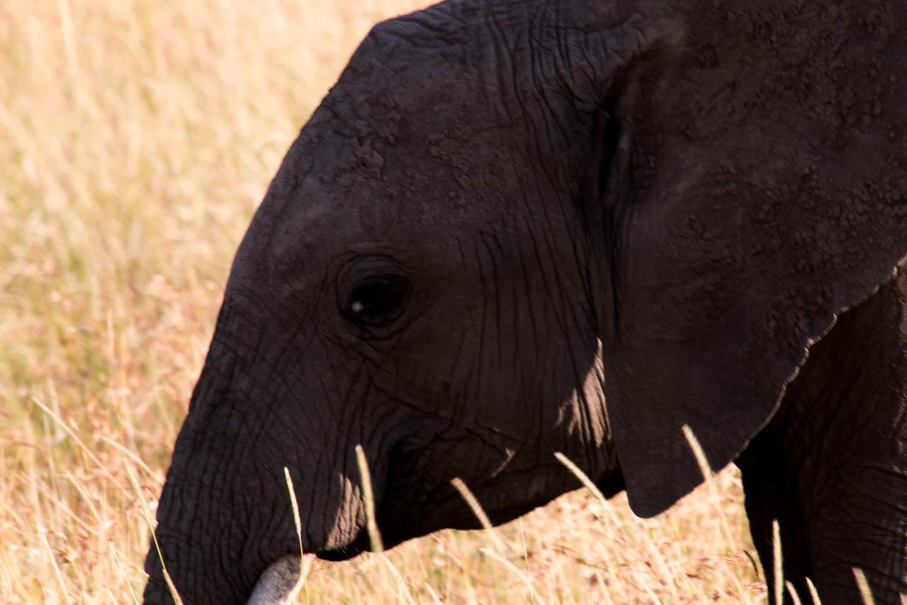 Elefant (44)