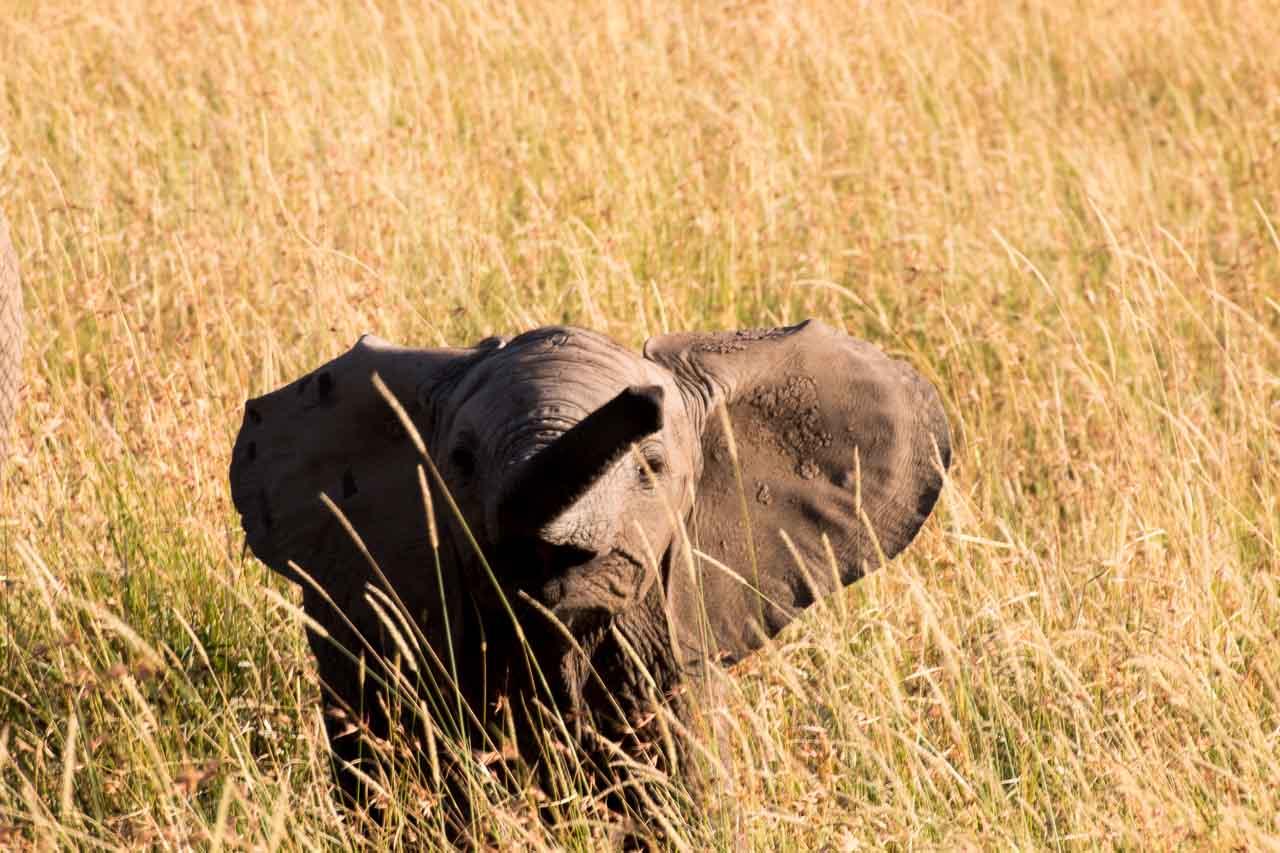 Elefant (46)