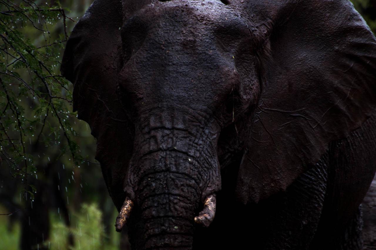 Elefant (53)