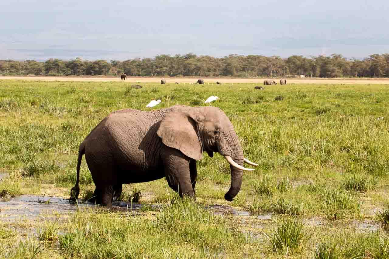 Elefant (57)