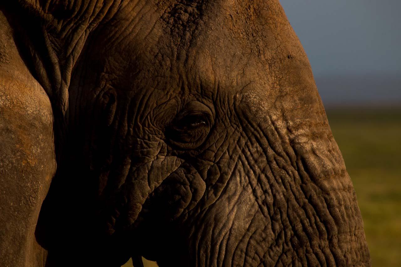 Elefant (8)