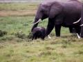 Elefant (12)