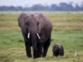 Elefant (13)