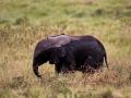 Elefant (15)