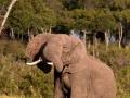 Elefant (23)