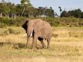 Elefant (24)