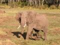 Elefant (25)