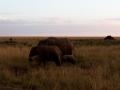 Elefant (28)