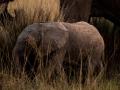 Elefant (29)