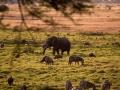 Elefant (3)