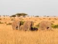 Elefant (34)