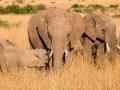 Elefant (35)