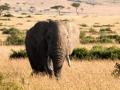 Elefant (38)