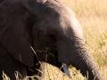Elefant (45)
