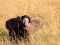 Elefant (47)