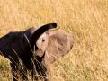 Elefant (48)