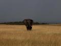 Elefant (49)