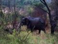 Elefant (52)
