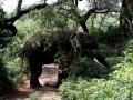 Elefant (56)