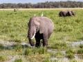 Elefant (58)