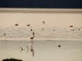 Flamingo-idyllisch-am-Lake-Nakuru