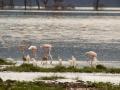 Flamingos-am-Lake-Nakuru-Afrika
