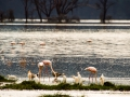 Flamingos-am-Lake-Nakuru