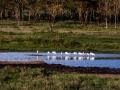 Flamingos-im-Flußlauf-Afrika-Lake-Nakuru