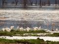 Gruppe-Flamingo-Afrika