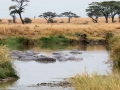 Flusspferd (4)