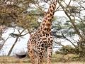 Giraffe-Portrait-Lake-Nakuru