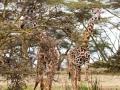 Zwei-Giraffen-Lake-Nakuru