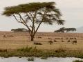 Gnu-Baobab-am-Ufer