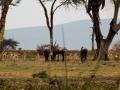 Gnu-mit-Gazelle-Lake-Nakuru