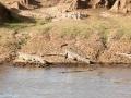 Krokodil (4)