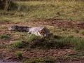 Krokodil (5)