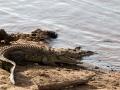 Krokodil (8)