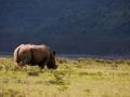 Graues-Nashorn-Lake-Nakuru