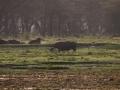 Graues-Nashorn-am-Flußufer-Afrika
