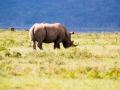 Lake-Nakuru-einsames-Nashorn